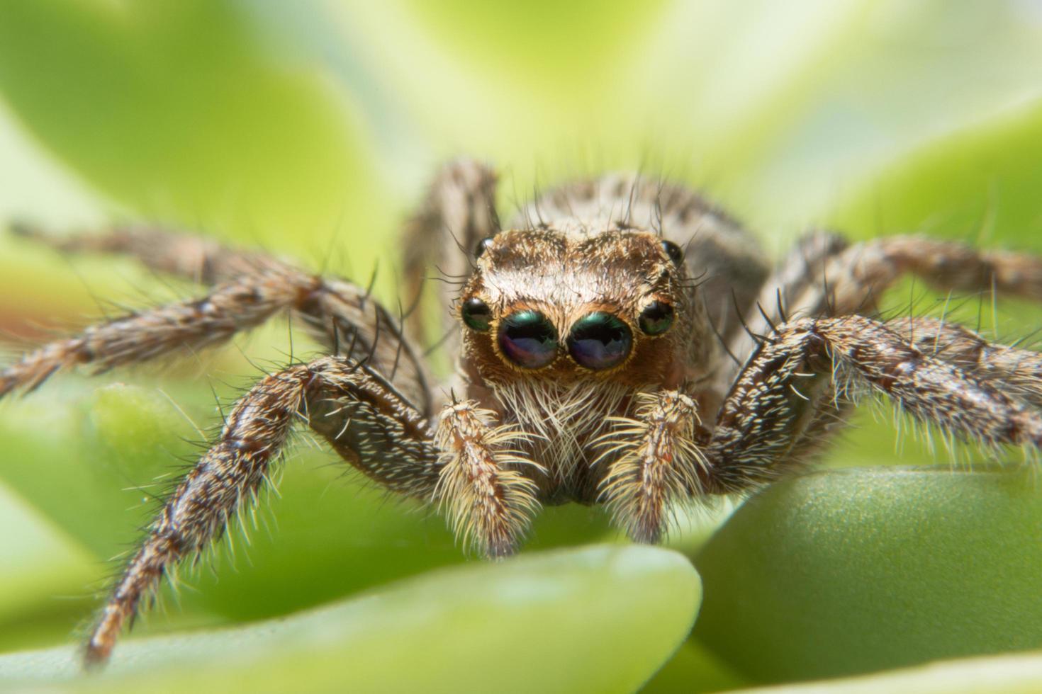 macro ragno vicino foto