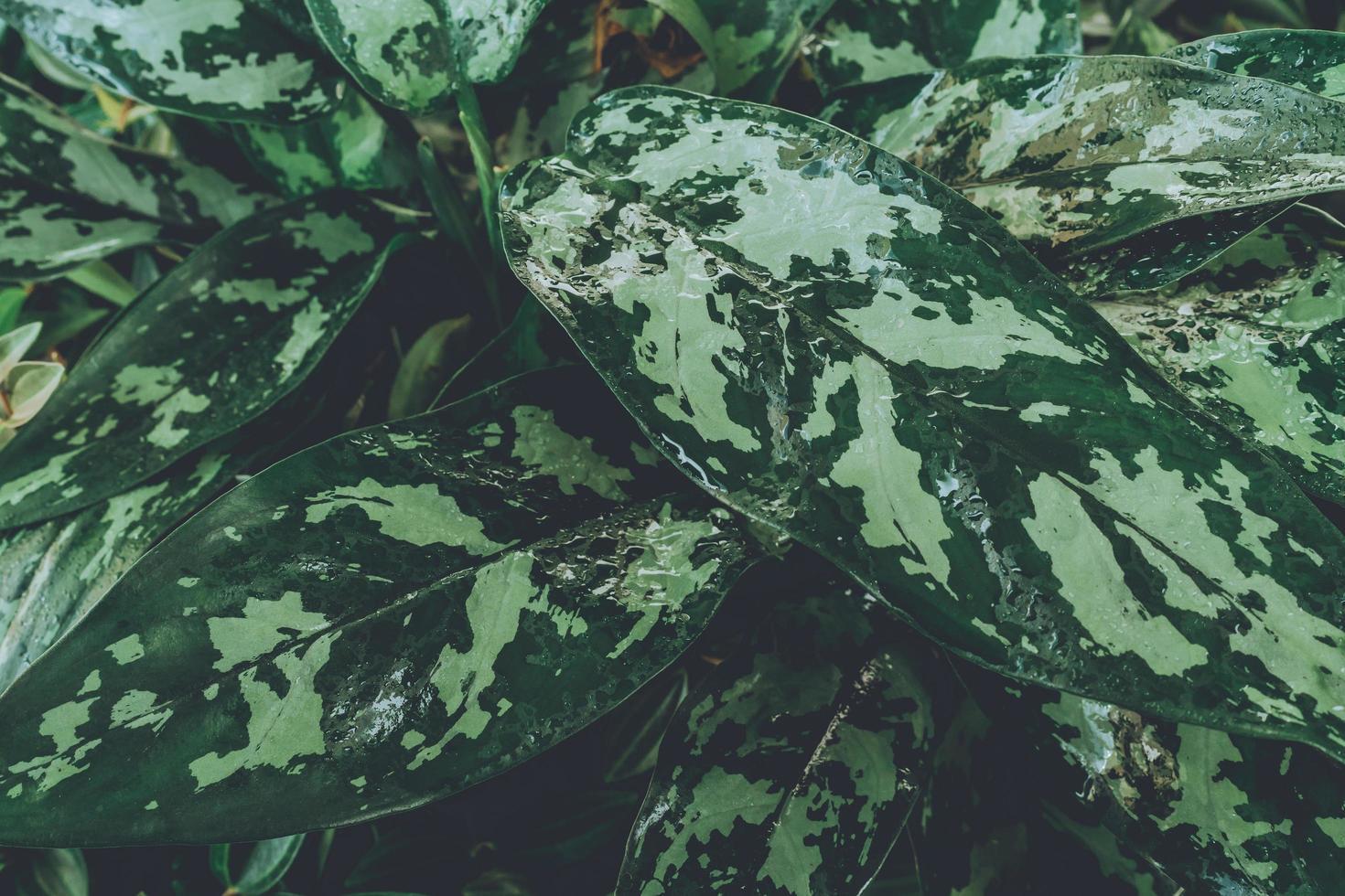 Chiuda in su della pianta verde foto