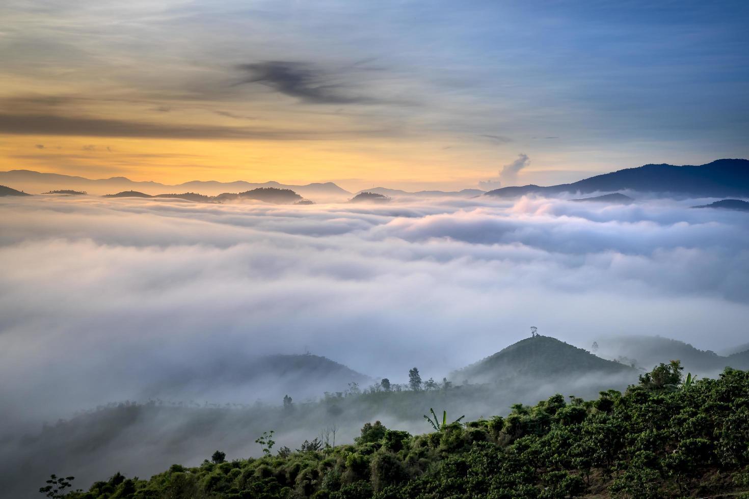 alberi che si affacciano sulle colline nebbiose foto