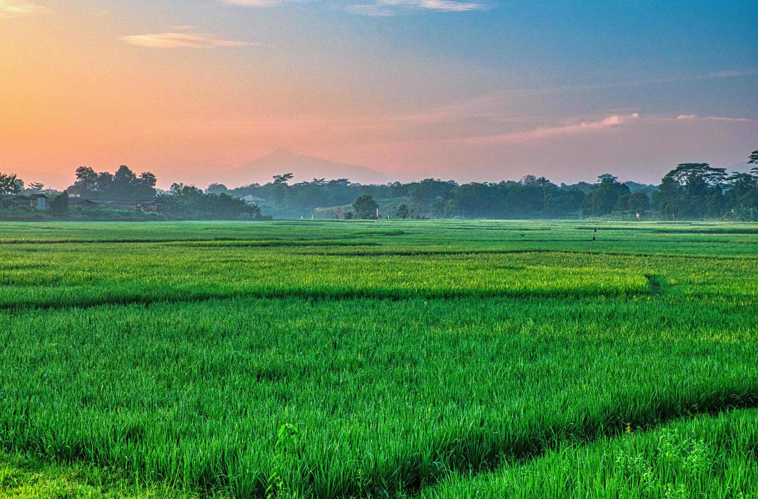 campo di erba verde con sole al tramonto foto