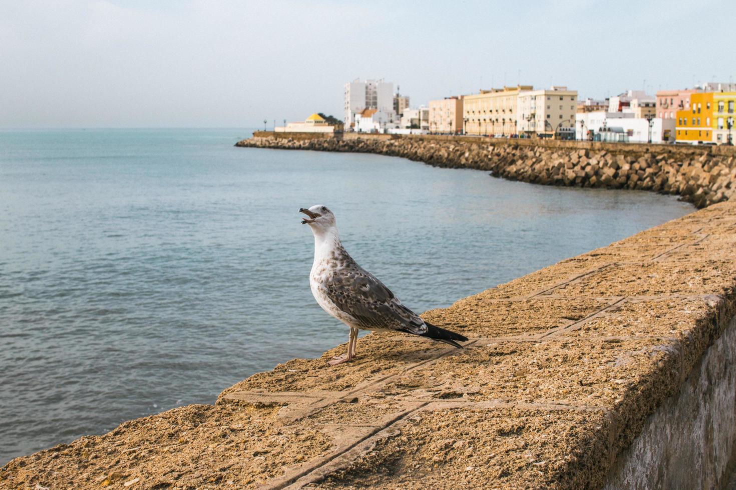 gabbiano si trova sulla riva del porto foto