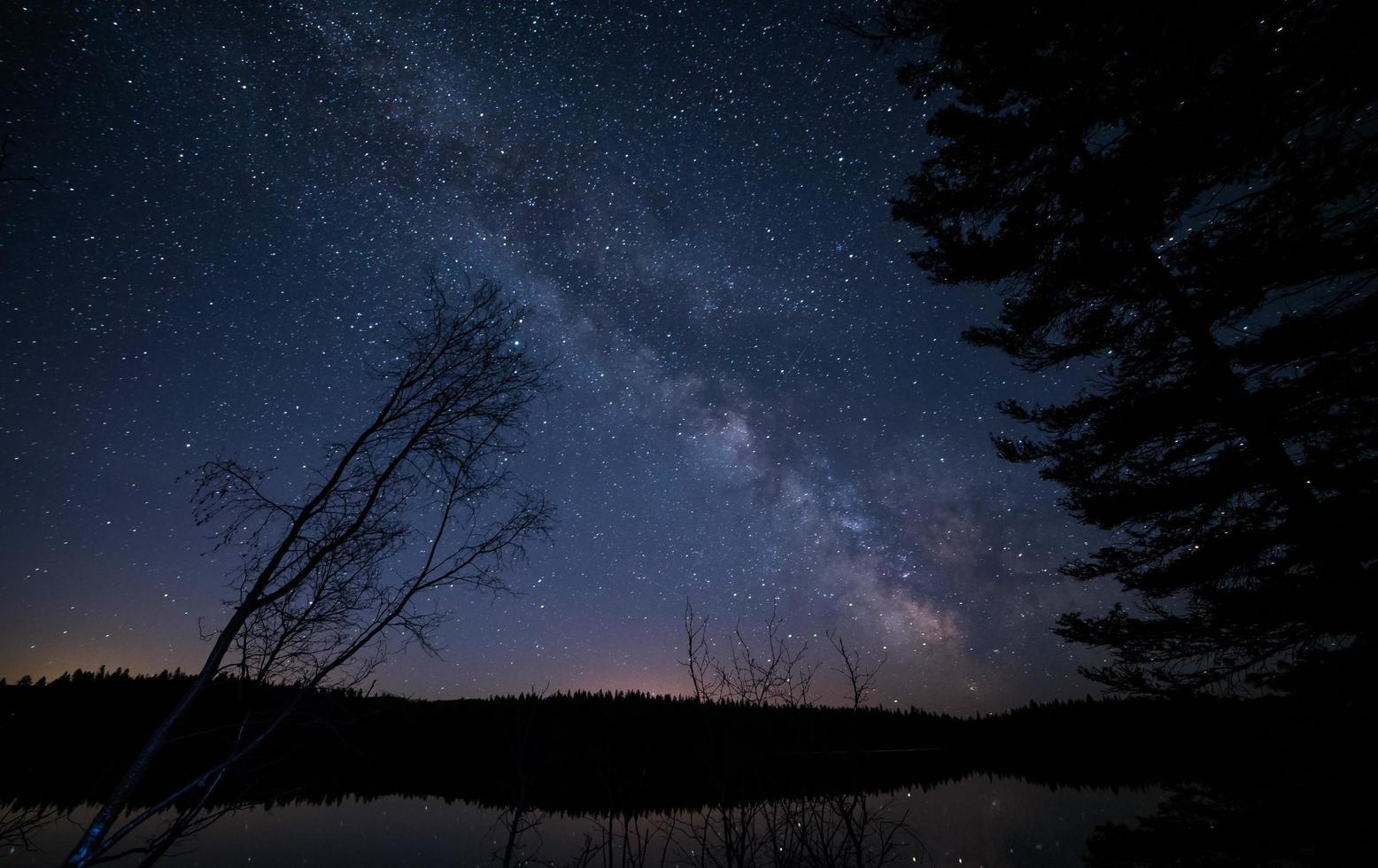 alberi sotto il cielo stellato foto