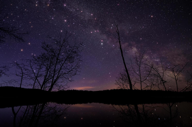 alberi sotto il cielo notturno stellato foto