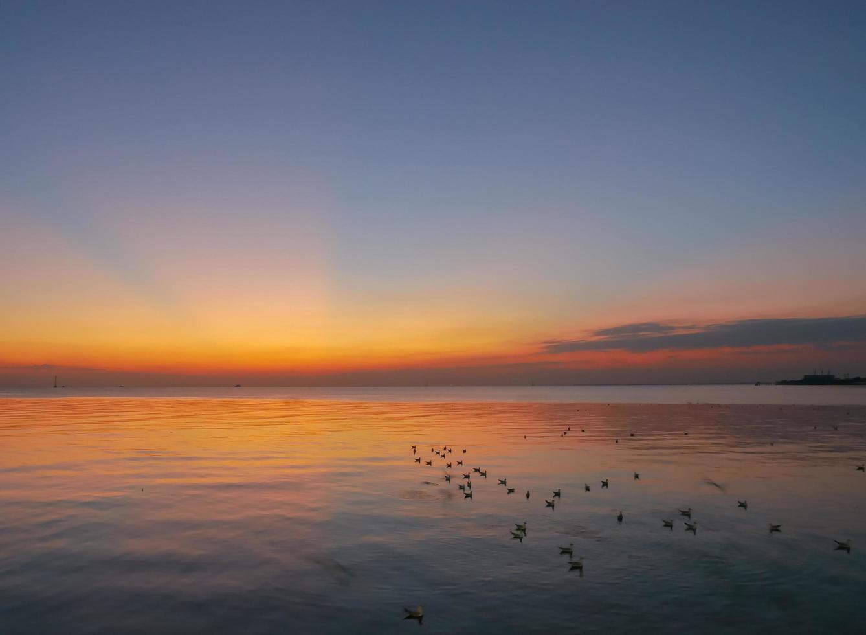gabbiani che guadano nell'oceano durante il tramonto foto