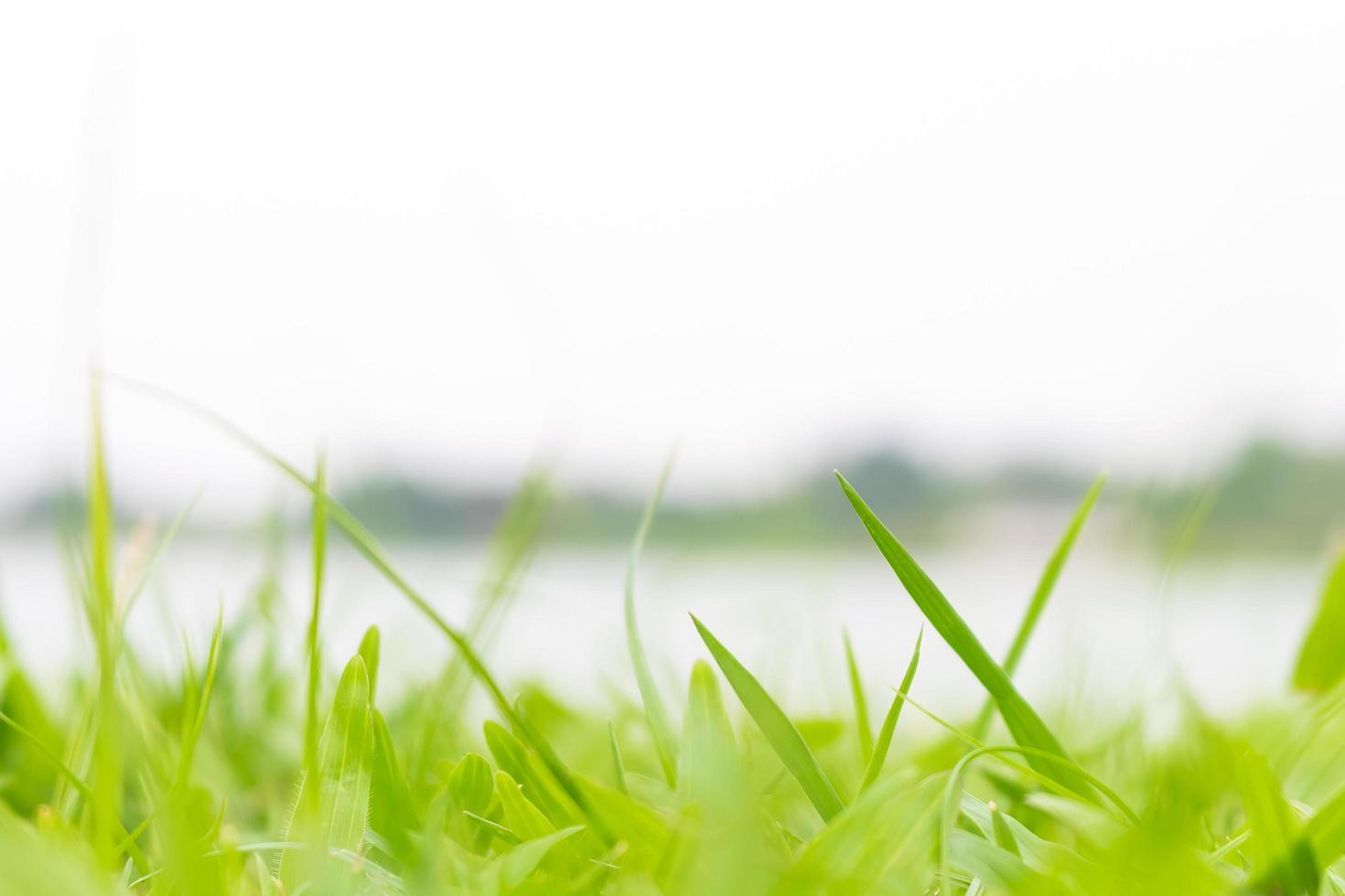 primo piano del campo verde erboso foto