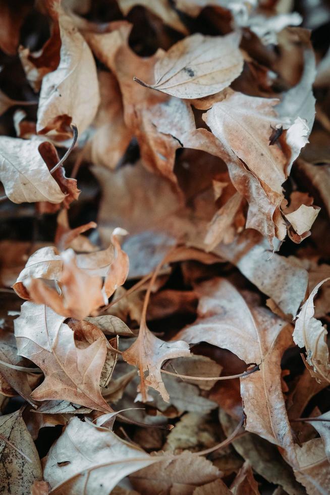 mucchio di foglie d'autunno foto
