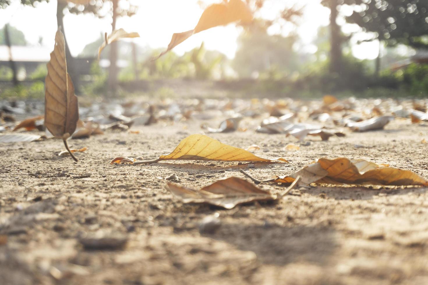 foglie secche autunnali che cadono a terra foto