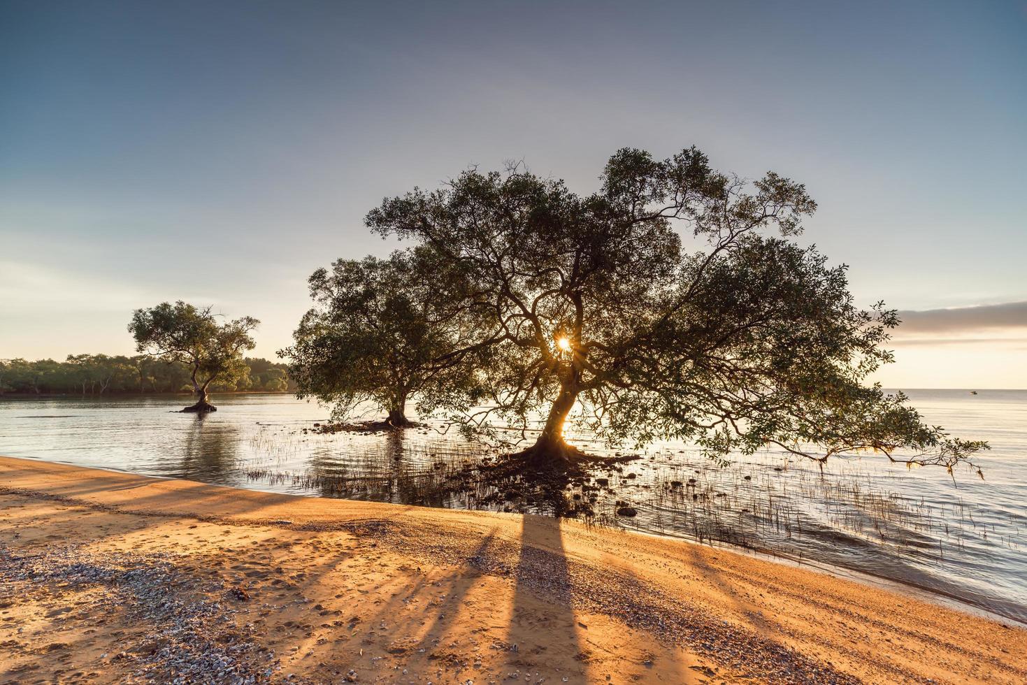 alberi in acqua in spiaggia foto