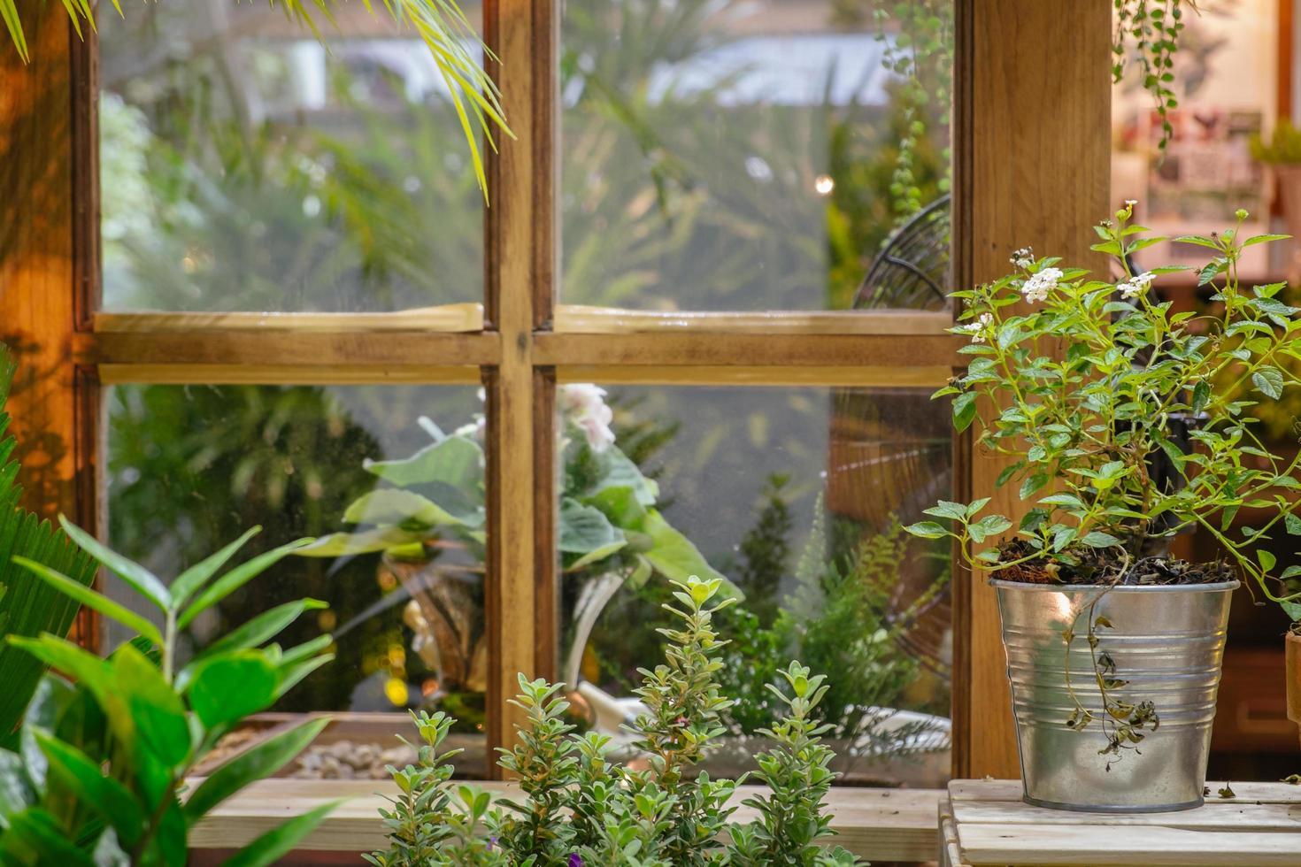 piante verdi in un giardino con la vecchia finestra in legno d'epoca foto