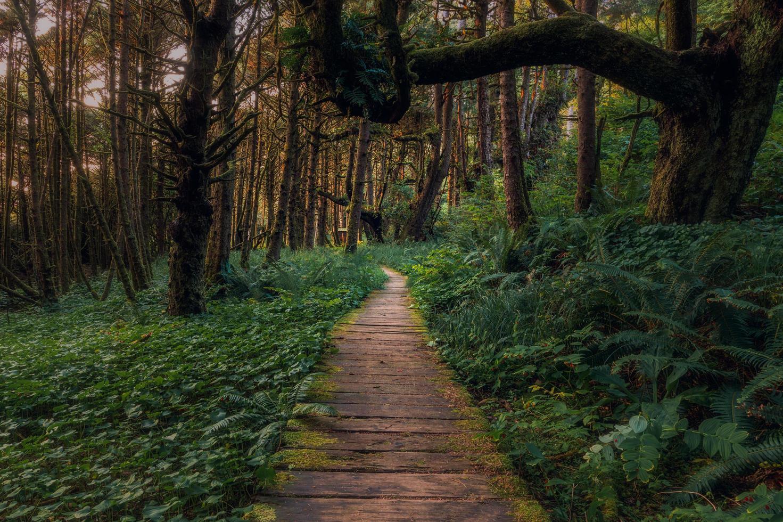 sentiero in legno marrone foto