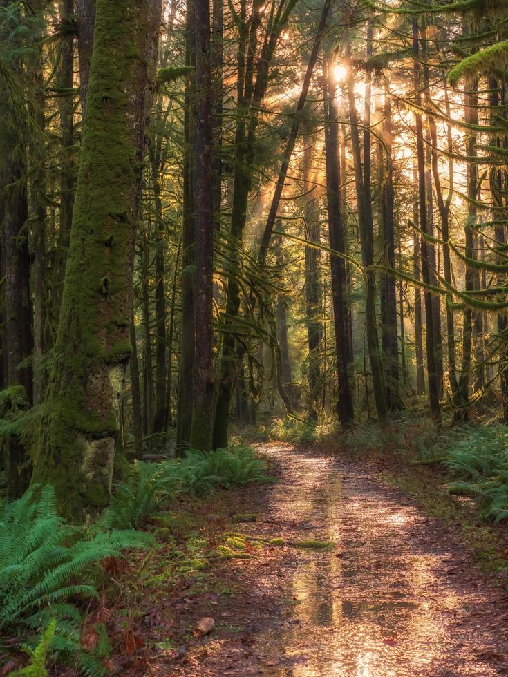sentiero marrone nei boschi foto