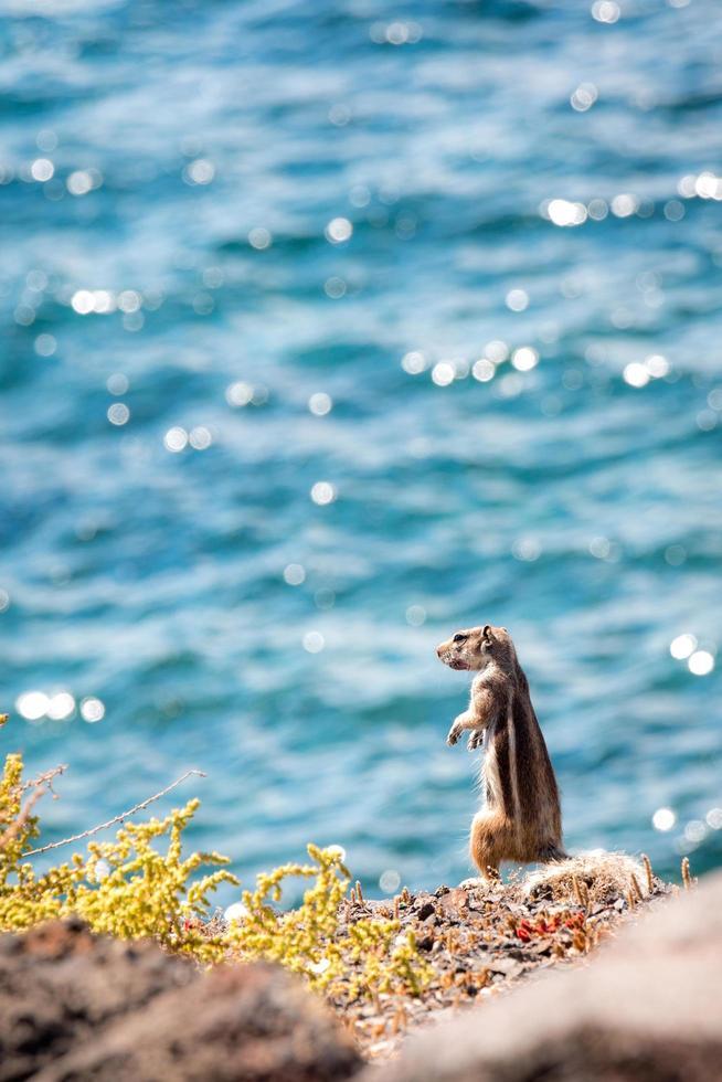 scoiattolo a terra in piedi su una scogliera foto