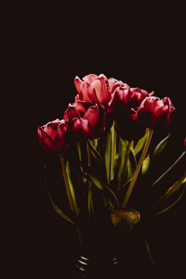 bouquet di tulipani rossi su sfondo scuro foto