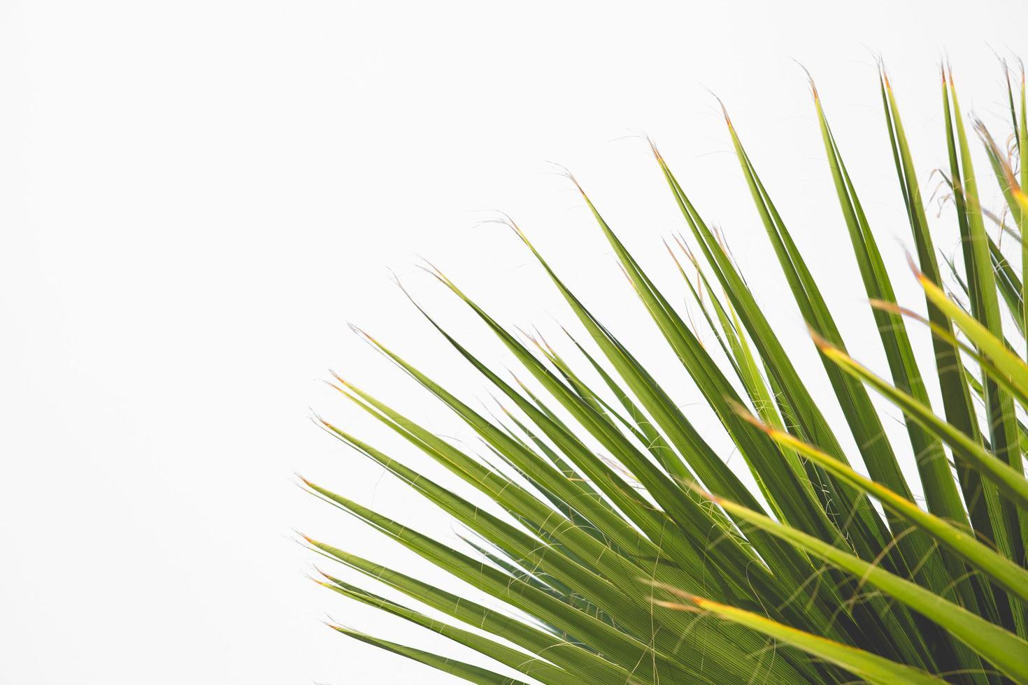 foglie di piante verdi foto