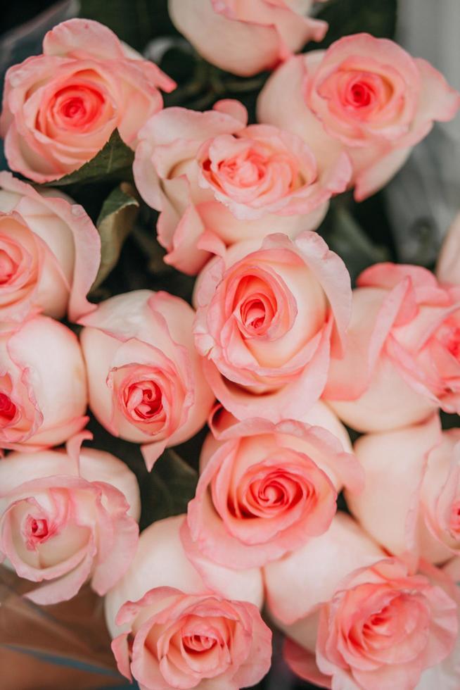 primo piano di rose rosa foto