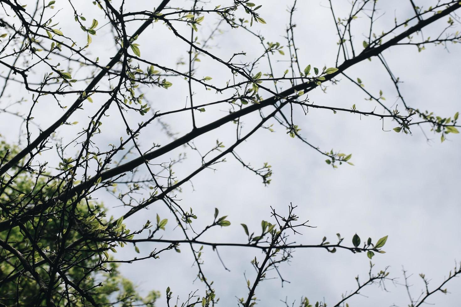 albero nudo foglia verde foto