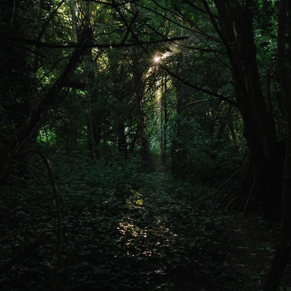 alberi verdi sulla foresta foto