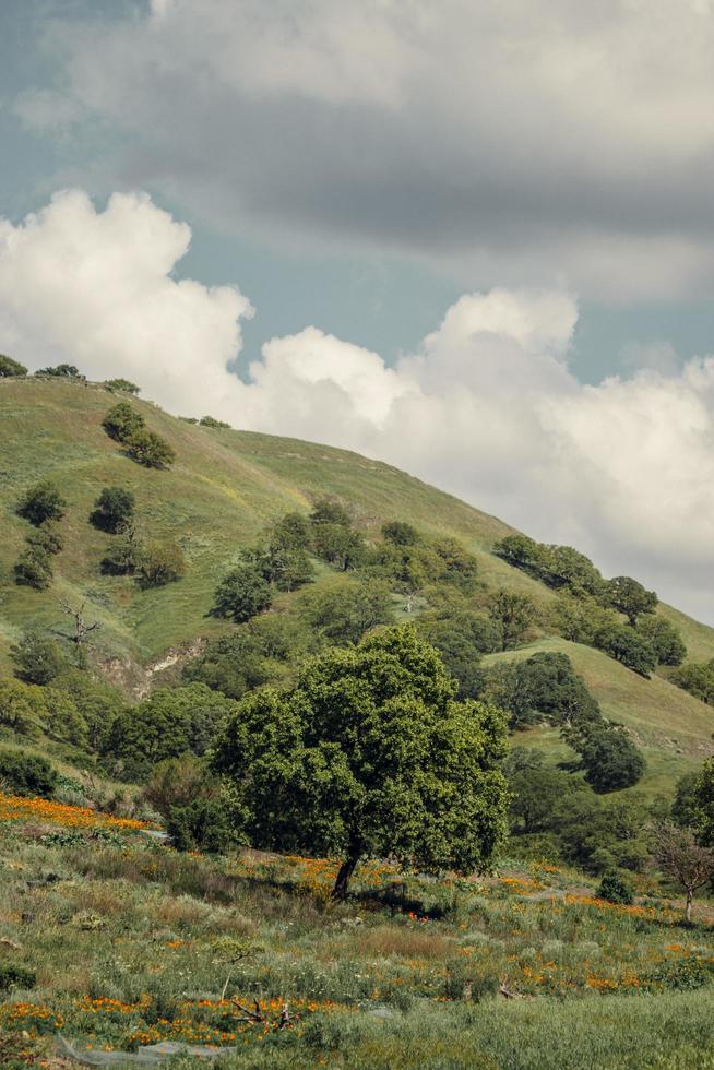 verdi colline sotto le nuvole blu foto
