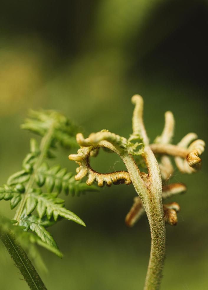 pianta verde in dettaglio foto