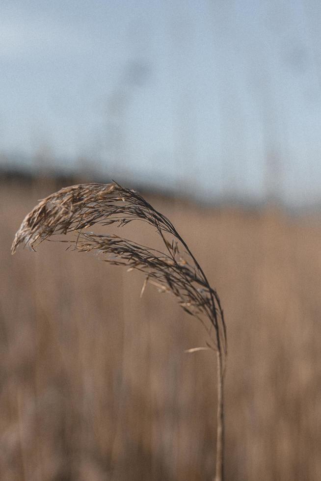 grano integrale nella fine sulla fotografia foto