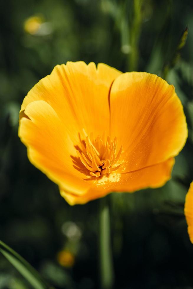 un singolo fiore giallo al sole foto