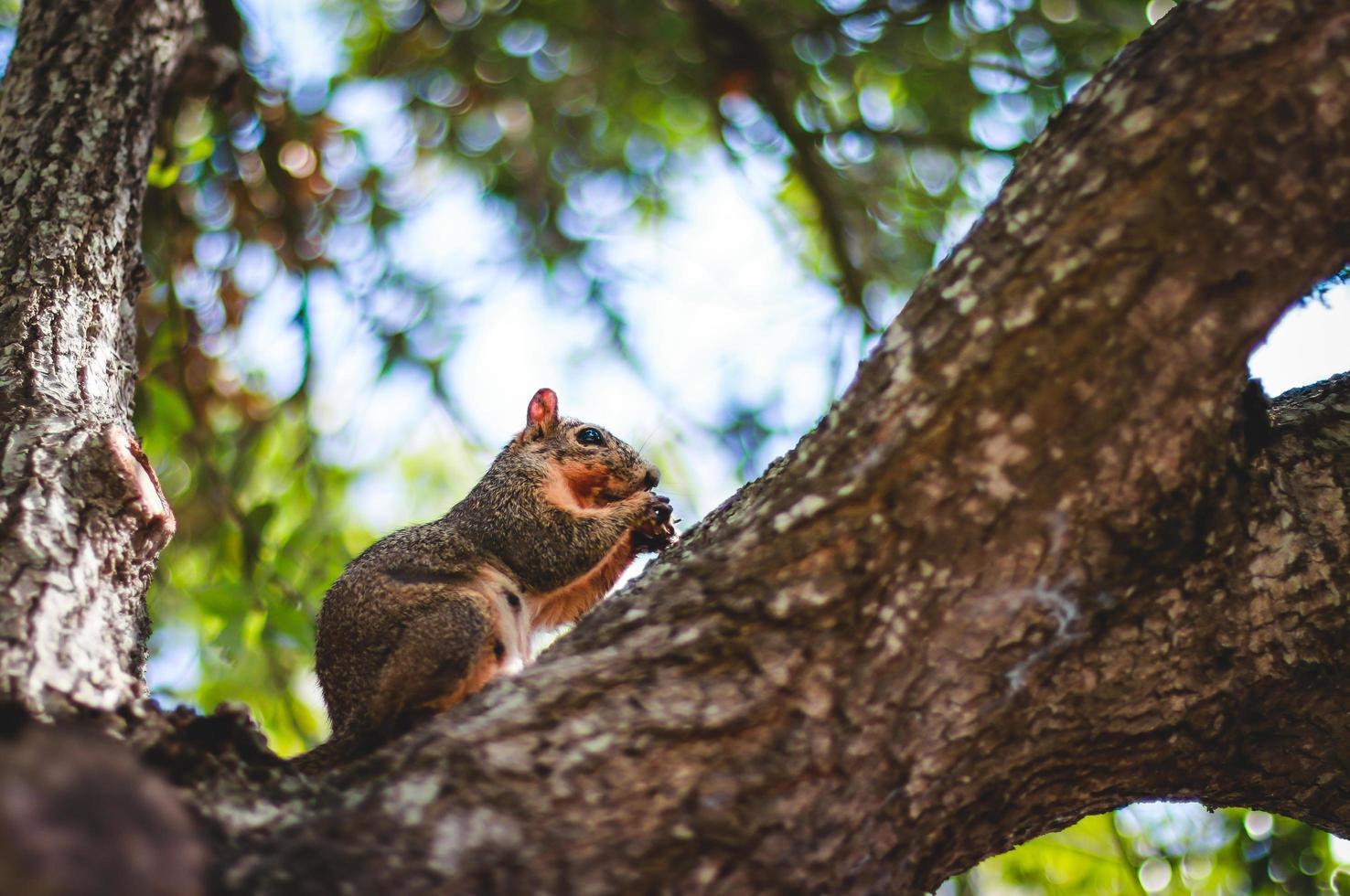 scoiattolo in un albero foto
