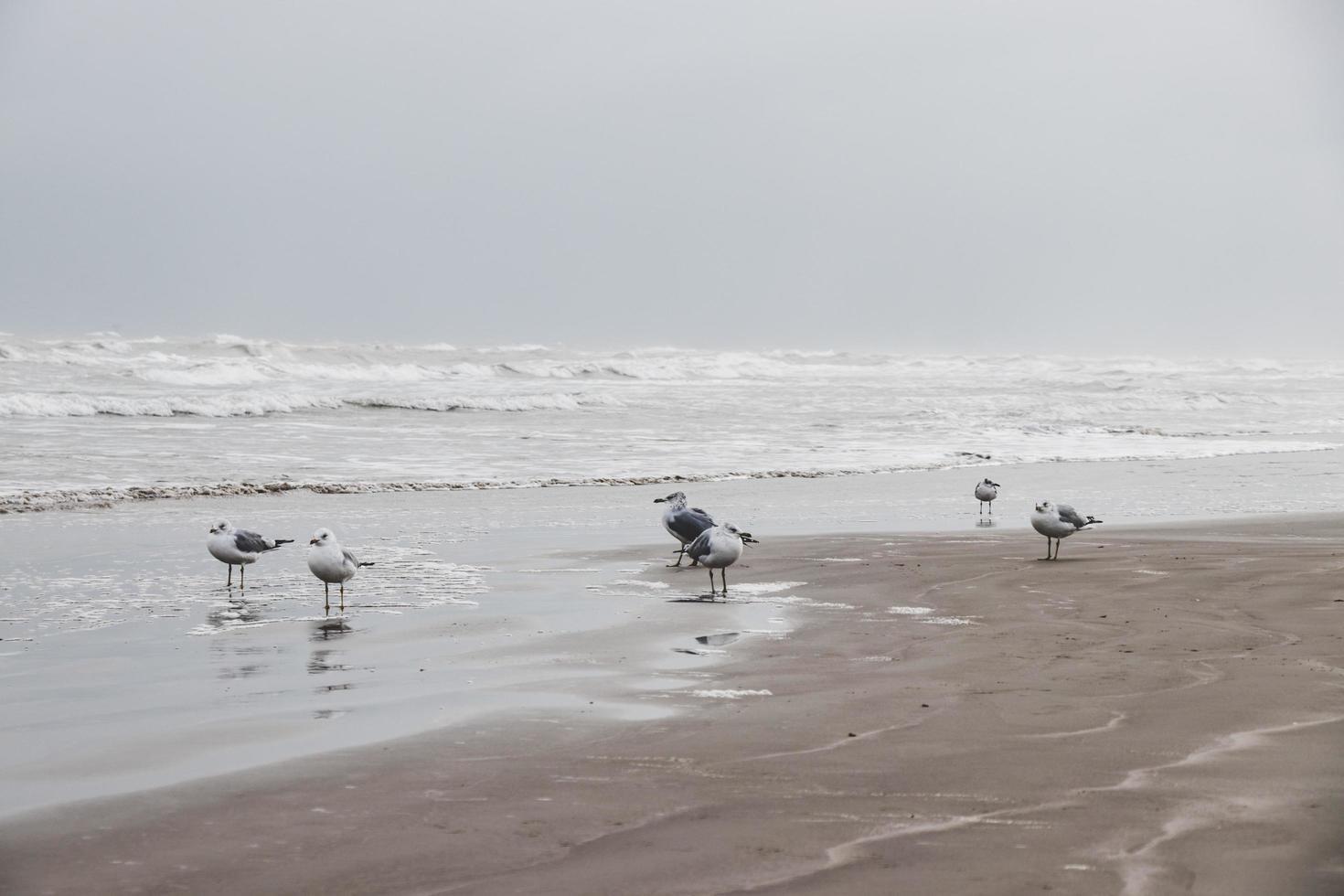 gabbiani in riva al mare foto