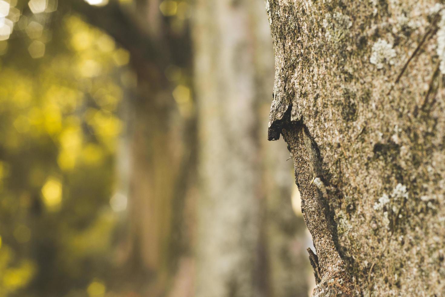 primo piano del tronco d'albero foto