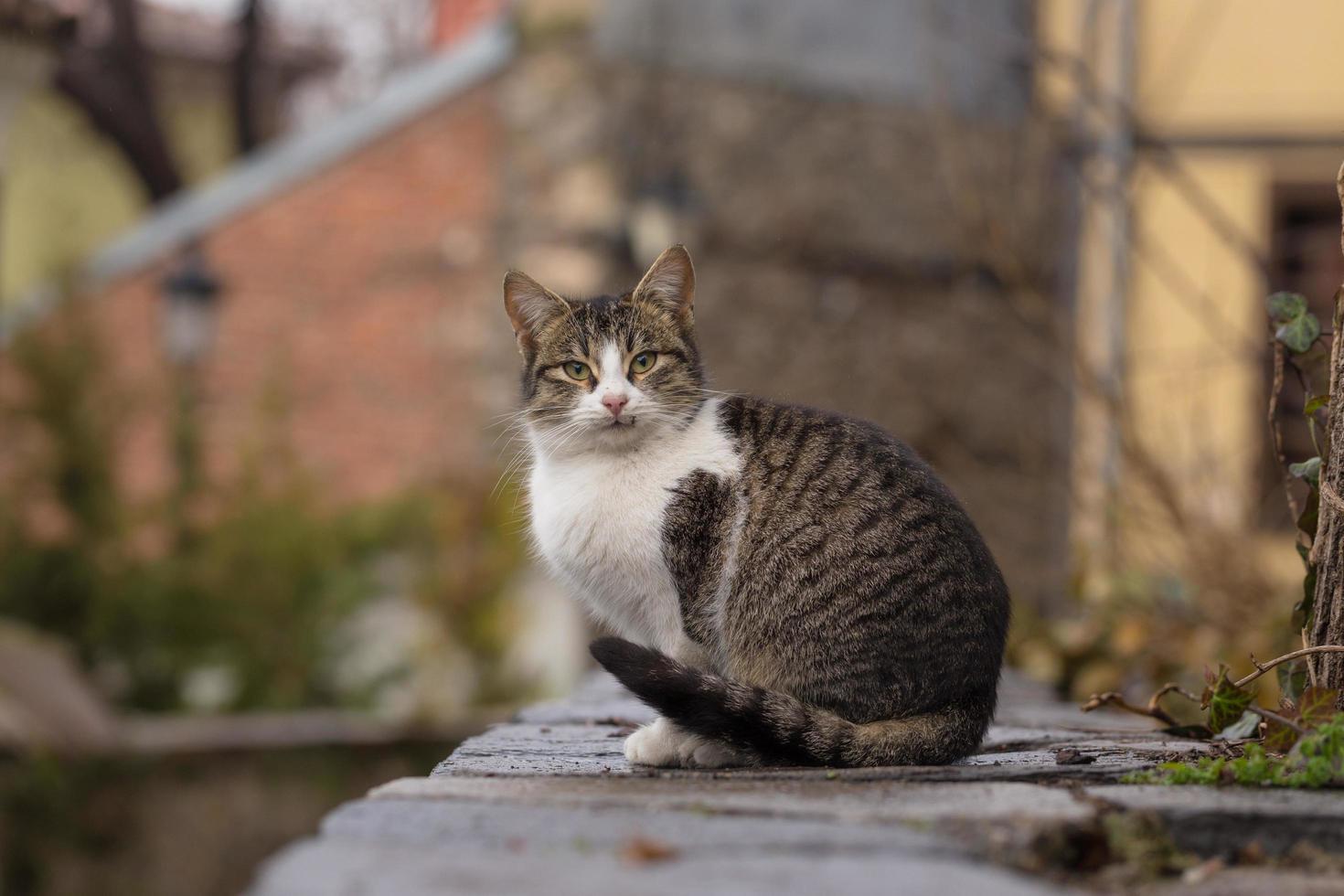 vicino fotografia di gatto soriano foto