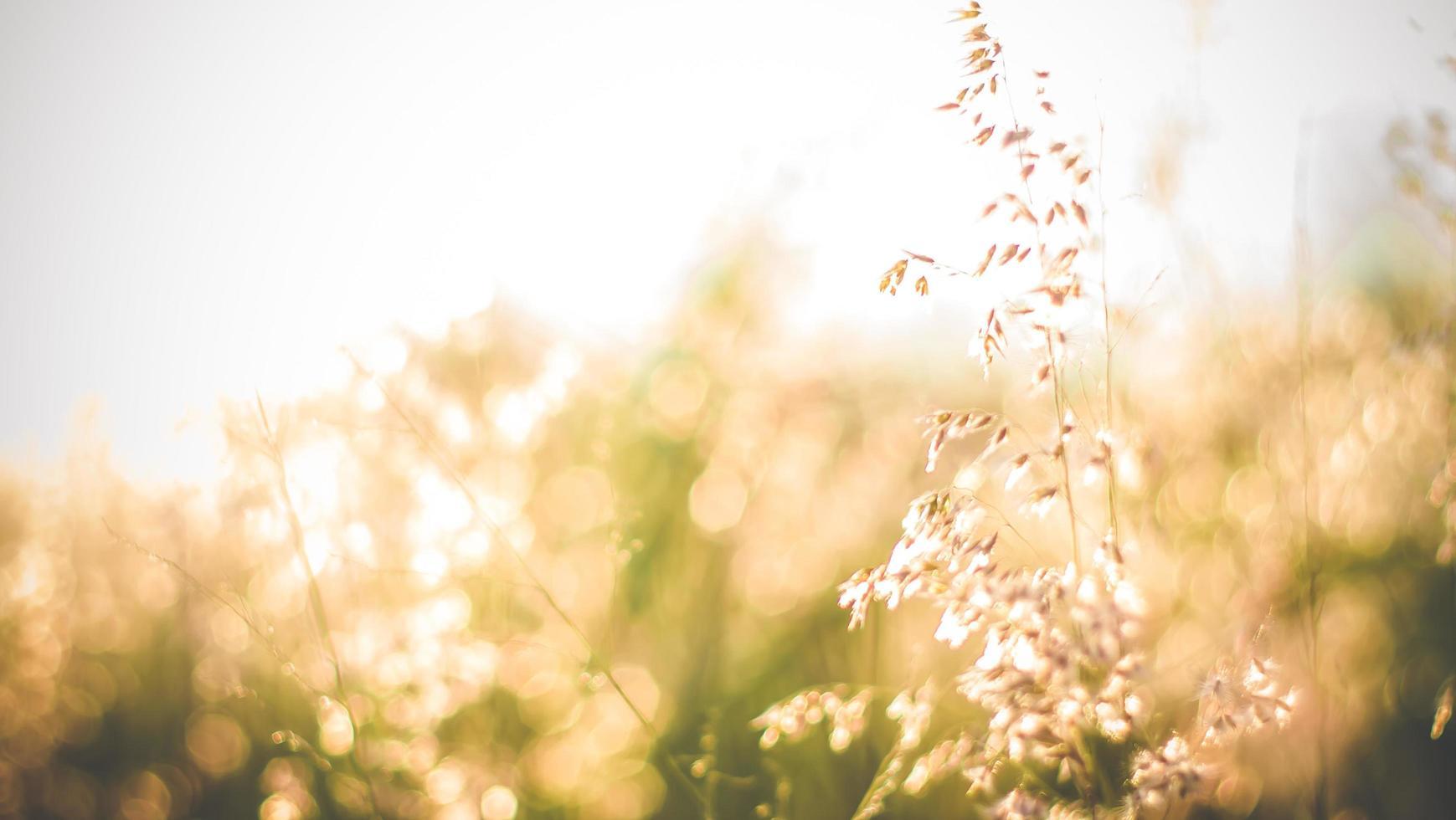 primo piano di erba selvatica foto