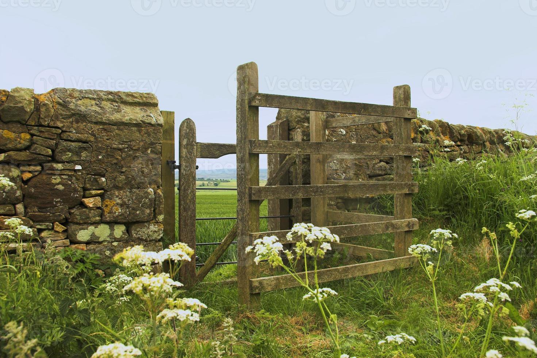 baci cancello. foto