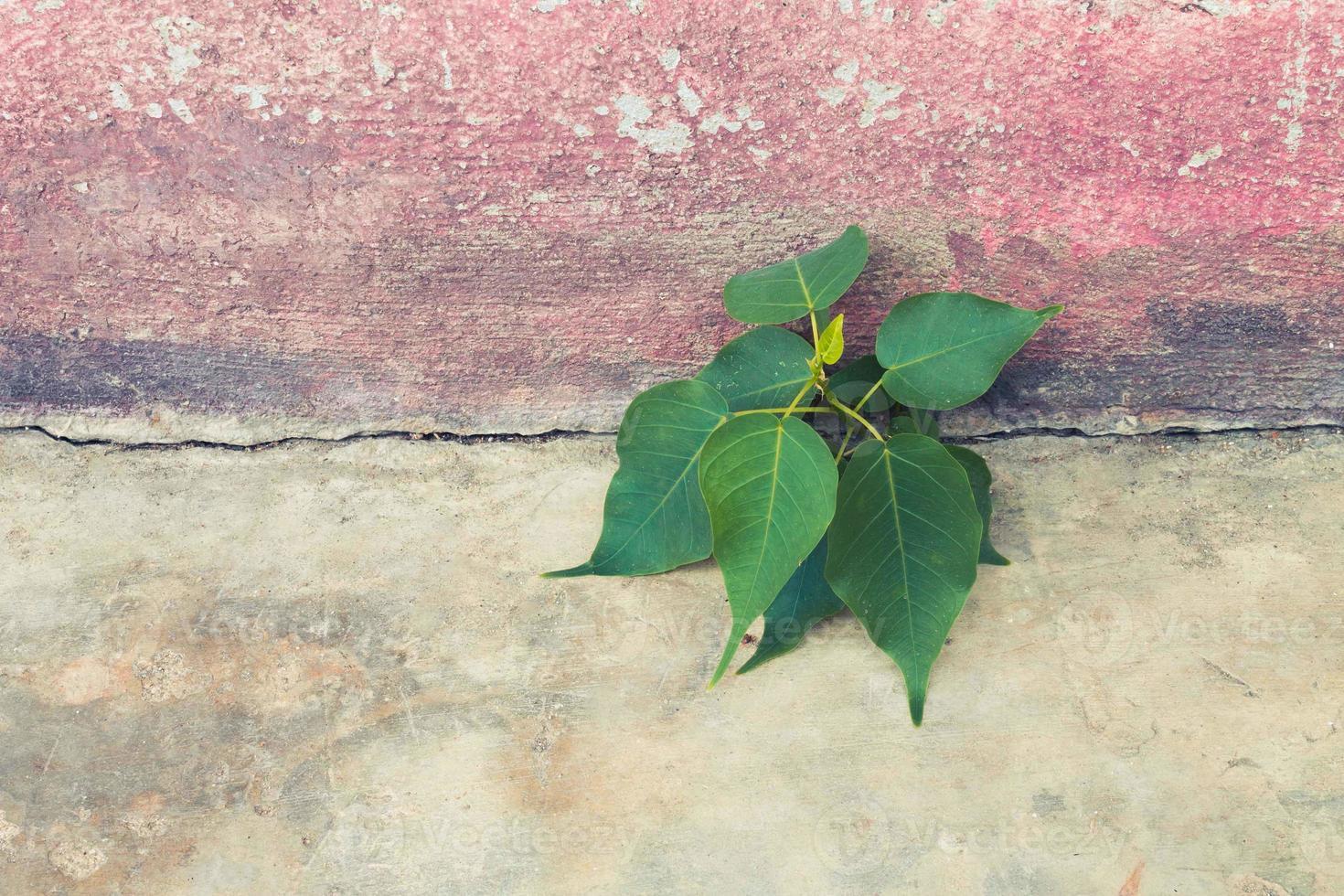albero che cresce in calcestruzzo foto