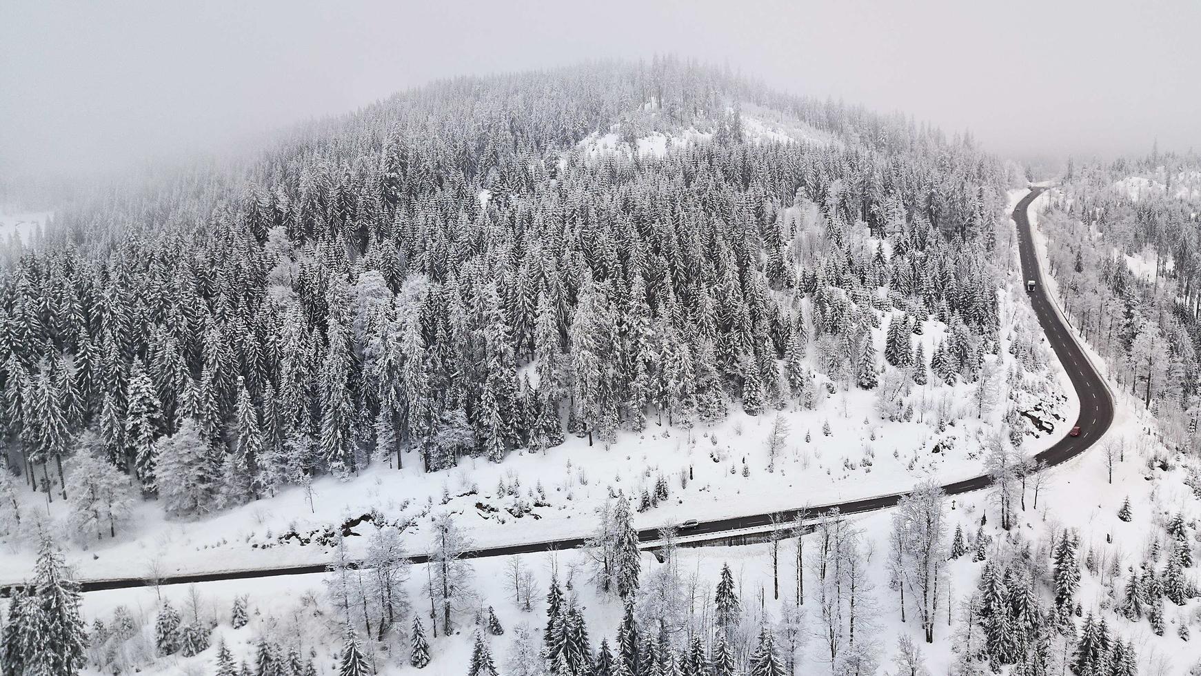 nevaio con alberi di pino e strada foto
