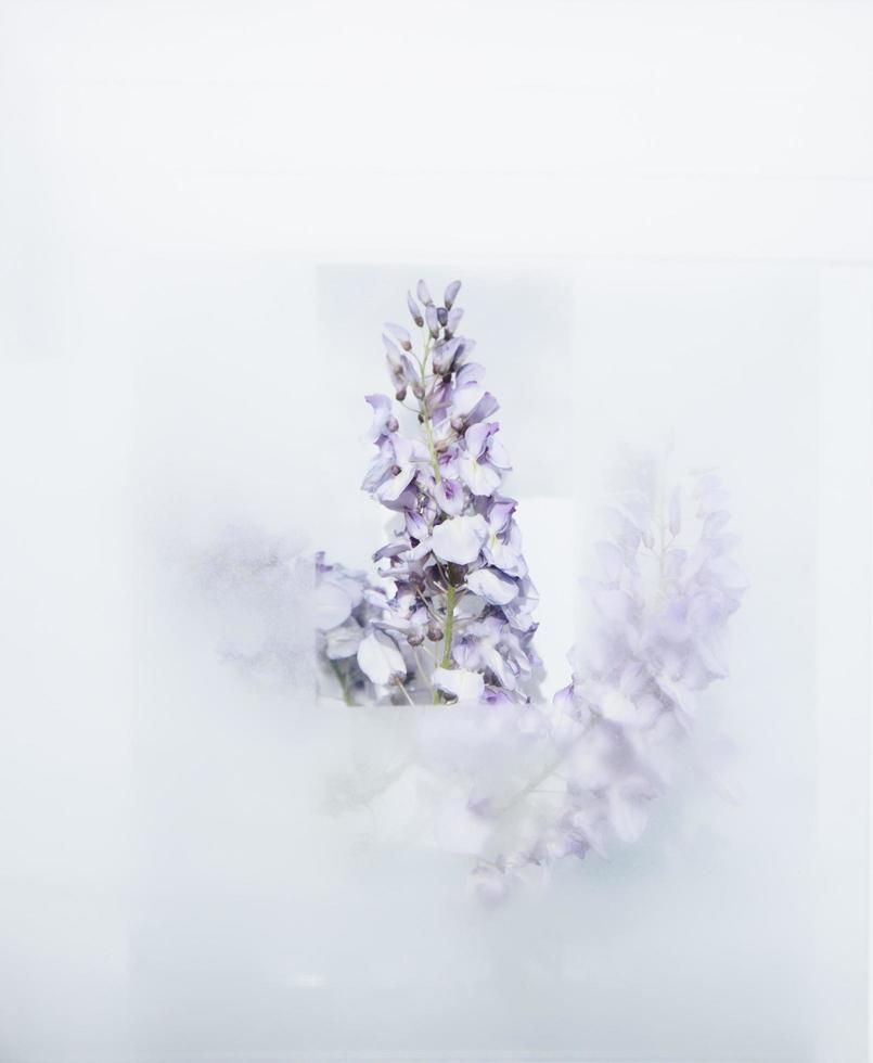 rugiada su vetro con fiore foto