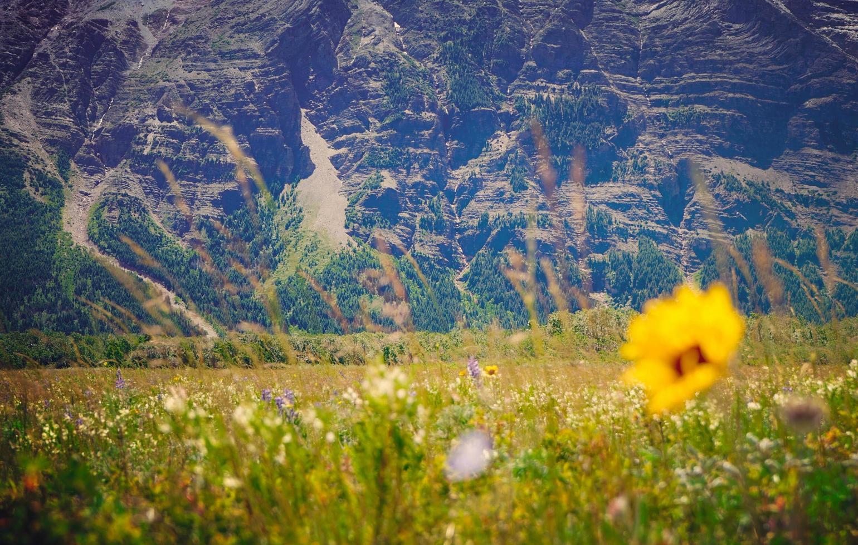 fiore giallo petaled sul campo in erba foto