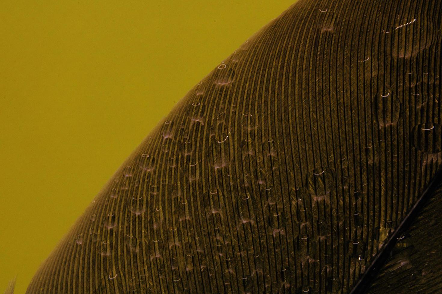 trame a strisce nere su giallo foto