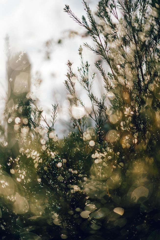 albero verde e gocce di rugiada foto