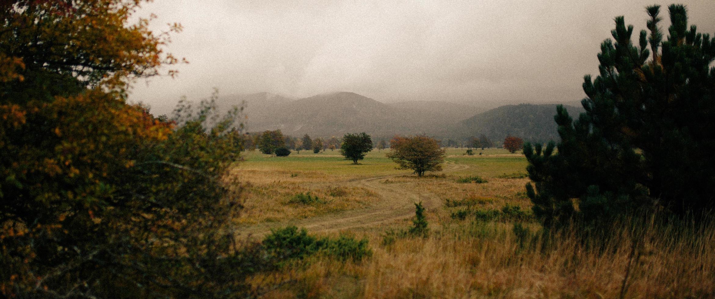 vista nebbiosa del campo in erba foto