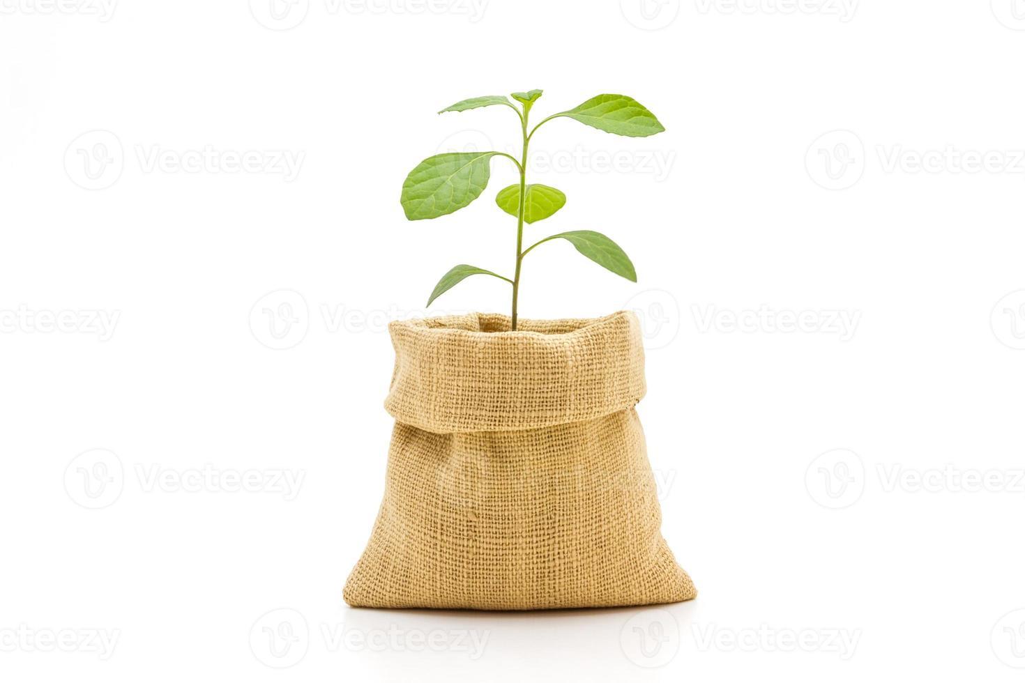 giovane pianta in borsa. foto