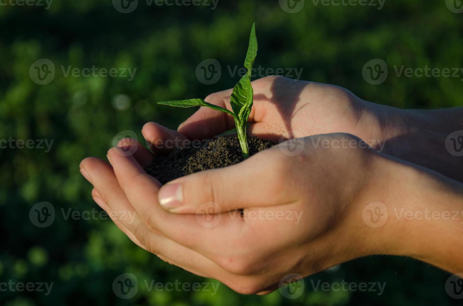 mani che tengono la piantina con terreno sul blackground verde del bokeh foto