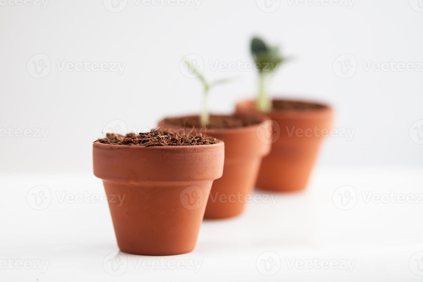 concetto di crescita. vasi di terracotta foto