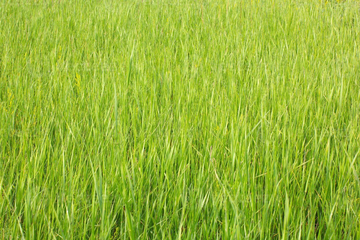 vista sull'erba con profondità di campo ridotta foto