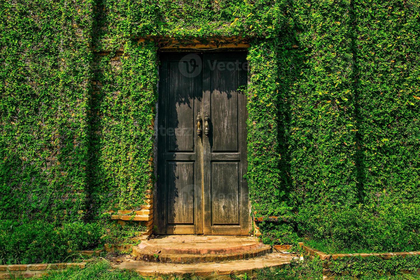parete ricoperta di edera verde foto