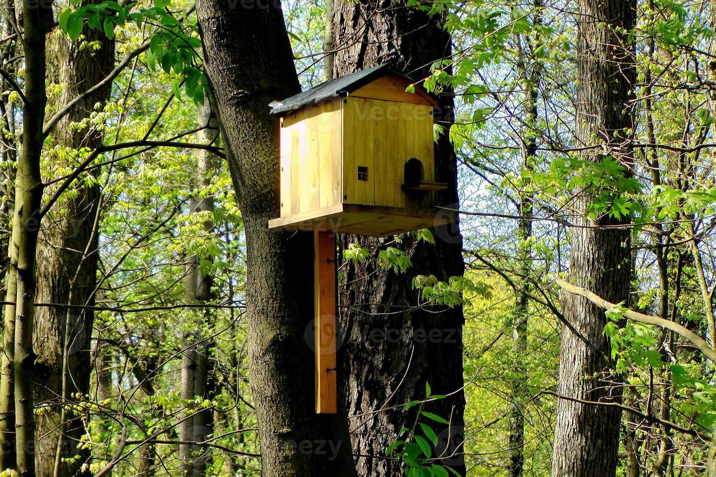 birdhouse foto