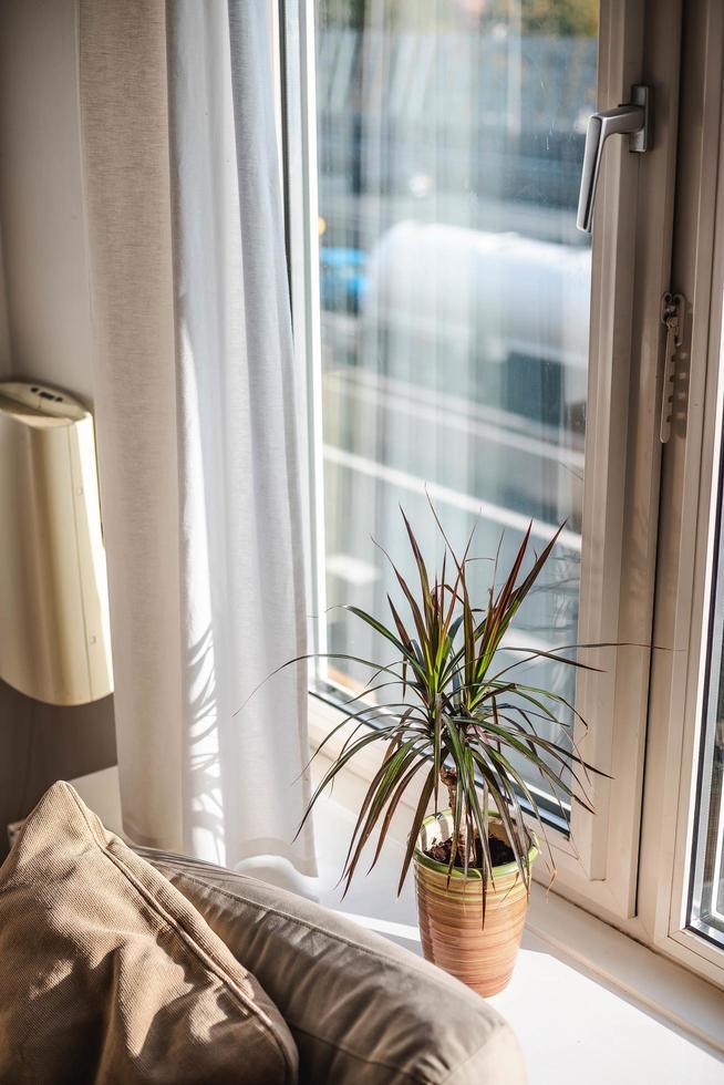 pianta e divano accanto alla finestra foto