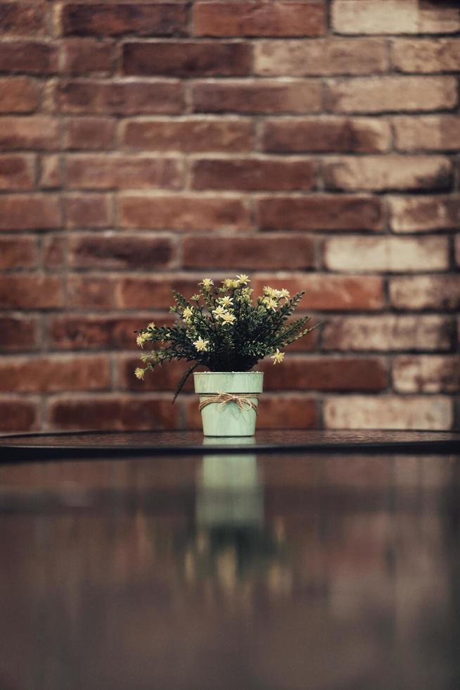 fiore bianco aster in un vaso foto