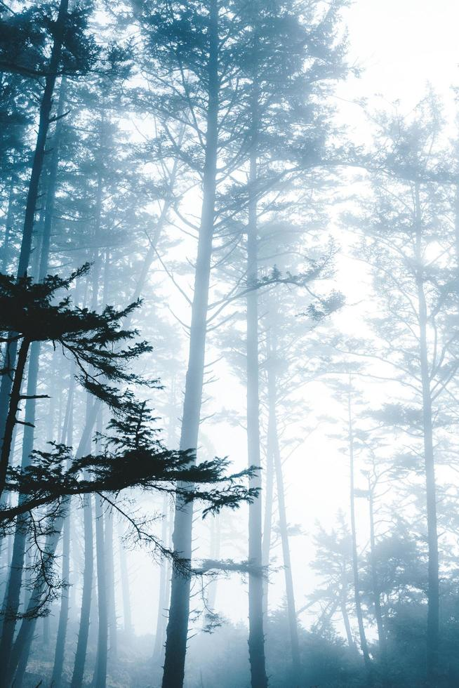 foresta sotto il cielo bianco foto