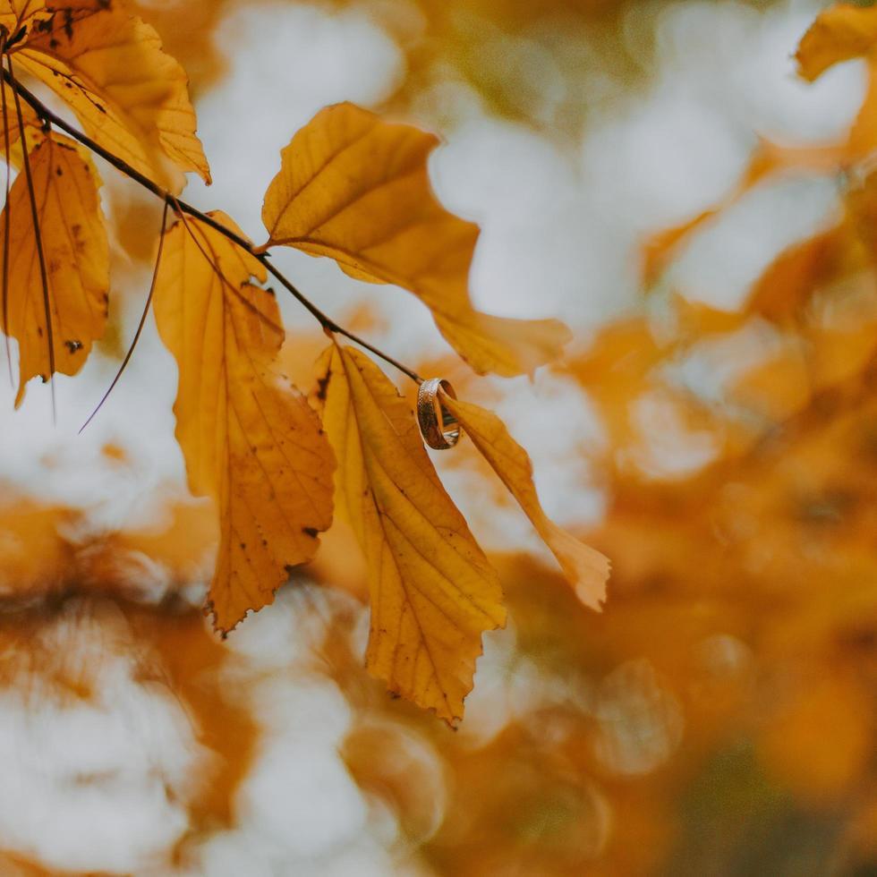 primo piano dell'anello sulle foglie d'autunno foto