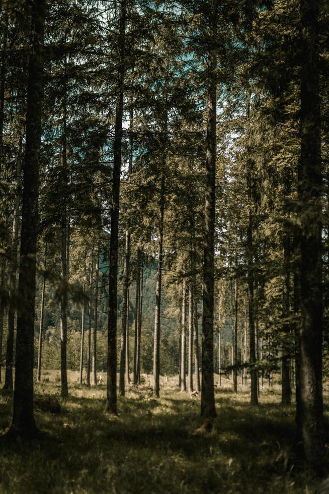 alberi verdi e marroni durante il giorno foto
