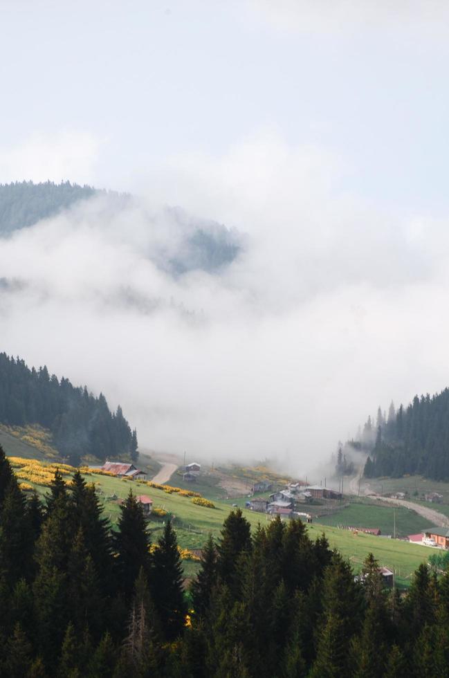 vista aerea di montagne e alberi nella nebbia foto